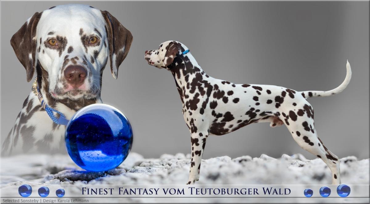 Neuer Deckrüde Finest Fantasy vom Teutoburger Wald