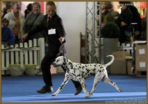 ... Doghandler Michael Lehmann präsentiert Christi ORMOND Exquisite Selection