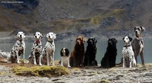 ... Der Hund - Das Rudeltier