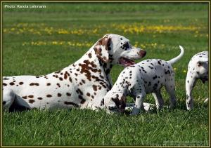 ... Wohlbefinden des Hundes durch Entspannung