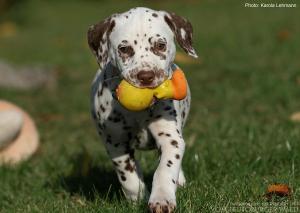 ... das richtige Spielzeug ist langlebig und macht Freude