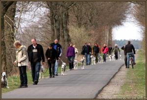 ... gehorsame Hunde beim strukturierten Spaziergang