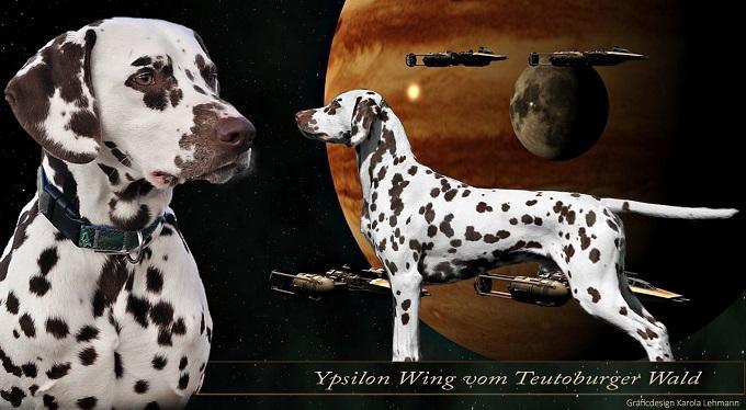 Ypsilon Wing vom Teutoburger Wald