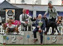 VDH Annual Trophy Show Hannover (DE) - BEST IN GROUP - Ch. Obonya's Pride Anna-Ariella