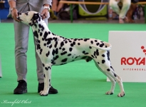 FCI WORLD DOG SHOW Amsterdam (NL)