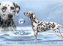 Präsentation unserer Zuchthündin Droplet Design vom Teutoburger Wald (genannt: Feline)