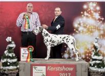 """CACIB Christmas Show """"De Kerstshow"""" (NL)"""