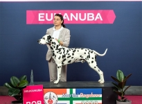CACIB Martini Dogshow Groningen (NL) Best of Breed – Int. Ch. Canadian Club vom Teutoburger Wald