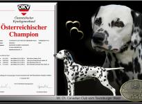 Cesar - Neuer Österreichischer Champion Canadian Club vom Teutoburger Wald