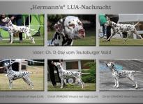 D-Day vom Teutoburger Wald - Hermann's LUA-Nachzucht