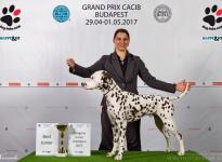 CACIB Budapest Grand Prix Show (HU)