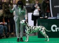 CRUFTS 2018 – Birmingham (GB)