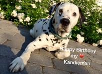 """""""Kandieman"""" feiert seinen 14. Geburtstag"""