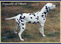 Organdie of Olbero