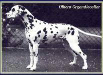 Olbero Organdie Collar