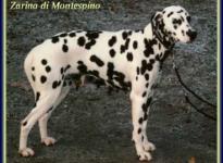 Zarina di Montespino