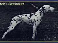 Flicka vom Margaretenhof