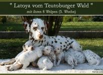 Latoya vom Teutoburger Wald mit ihren 8 Welpen (3.Woche)