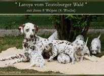 Latoya vom Teutoburger Wald mit ihren 8 Welpen (4. Woche)