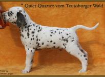 Quiet Quarter vom Teutoburger Wald (vermittelt an: Birgit Heise ,58119 Hagen)