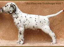 Shir Khan vom Teutoburger Wald genannt Sirius (vermittelt an: Birgit Heise, 58119 Hagen)
