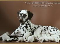 Christi ORMOND Empress Editon mit ihrem U - Wurf