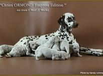 Christi ORMOND Empress Edition mit ihrem U - Wurf