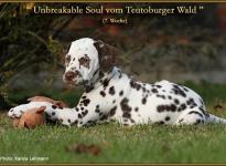 Unbreakable Soul vom Teutoburger Wald