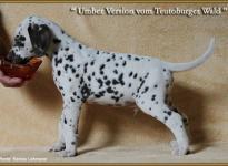 Umber Version vom Teutoburger Wald, Rufname Erwin