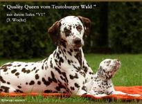 Quality Queen vom Teutoburger Wald mit Ihrem Sohn V1