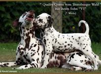 V1 vom Teutoburger Wald & seine Mama Quality Queen vom Teutoburger Wald