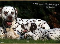 Papa Christi ORMOND Exquisite Selection & sein Sohn V1 vom Teutoburger Wald
