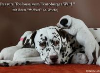 Bilder von unserem W-Wurf vom Teutoburger Wald