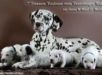 Mama Treasure Toulouse vom Teutoburger Wald (Rufname: Amena) mit ihrem W-Wurf