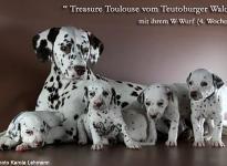 Treasure Toulouse vom Teutoburger Wald mit ihrem W-Wurf