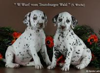 Walking Sunshine vom Teutoburger Wald & Water Lily vom Teutoburger Wald