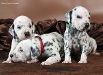 Drei weiß-schwarze Brüder: Mr. Blau, Mr. Rot und Mr. Grün