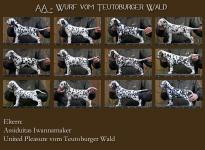 AA - Wurf vom Teutoburger Wald (7. Lebenswoche)