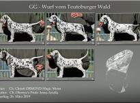 GG-Wurf vom Teutoburger Wald (7. Lebenswoche)