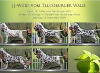 JJ-Wurf vom Teutoburger Wald - Standfotos 7 Wochen alt