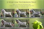 JJ-Wurf vom Teutoburger Wald - Standfotos (7 Wochen alt)