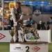 Canadian Club vom Teutoburger Wald (15 Monate) VDH Bundesjugendsieger 2017, Best of Breed (BOB), Best in Group 2 (BIG 2)