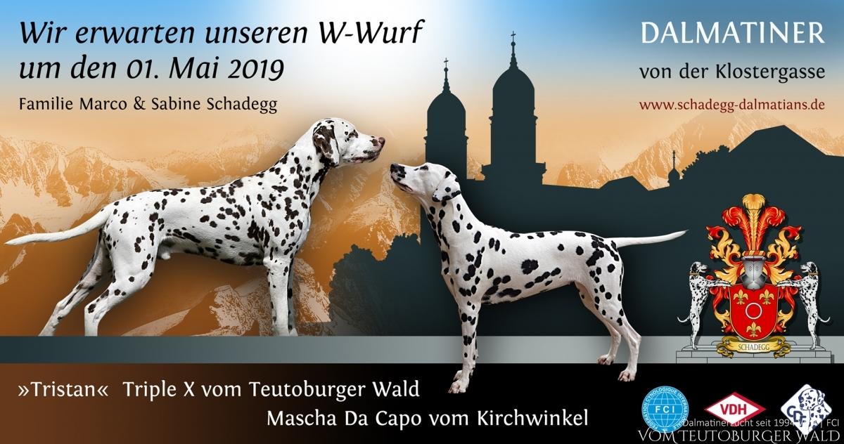 Infos zum W-Wurf von der Klostergasse