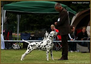 ... Doghandler Michael Lehmann präsentiert Spotnik´s First Farao For Ormond