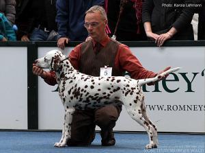 ... Doghandler Michael Lehmann präsentiert Latoya vom Teutoburger Wald