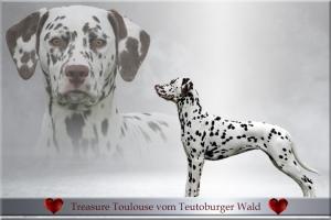 Unsere Nachzuchthündin Treasure Toulouse vom Teutoburger Wald (geb. 2010) Mutter W-Wurf, DD-Wurf, FF-Wurf vom Teutoburger Wald