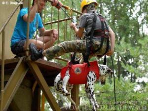 ... die Arbeit in der Rettungshundestaffel