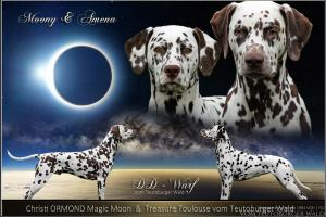 Christi ORMOND Magic Moon und Treasure Toulouse vom Teutoburger Wald