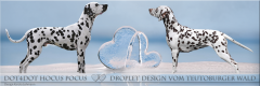 LL - Wurf vom Teutoburger Wald - Dot4Dot Hocus Pocus und Droplet Design vom Teutoburger Wald