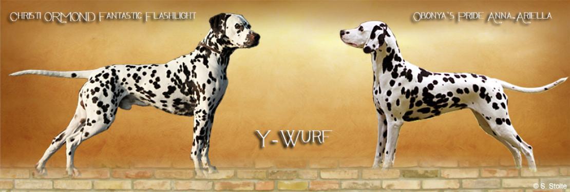 Y - Wurf vom Teutoburger Wald